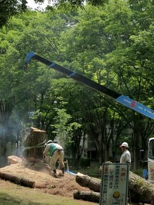 松伐採1405