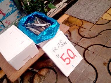 秋刀魚祭り!!w