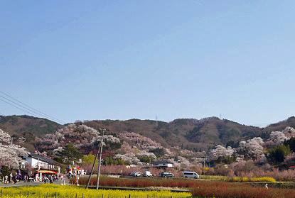 140415hanamiyama01.jpg