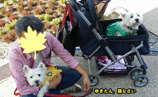 20140921_153040.jpg