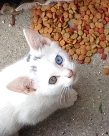 201141002 鈴が峰 猫 sirojpg ブログ
