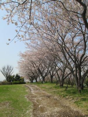 2014.4.9桜撮影 001