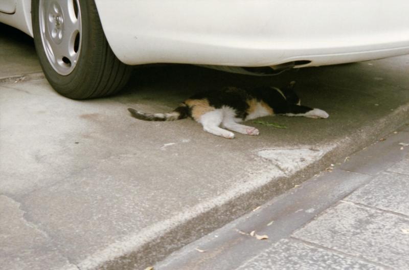 自動車の下で昼寝