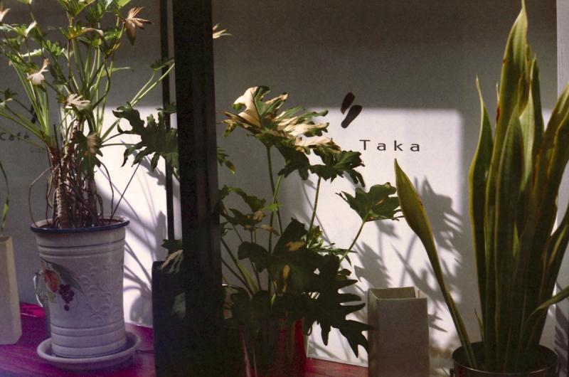 光と窓と植物