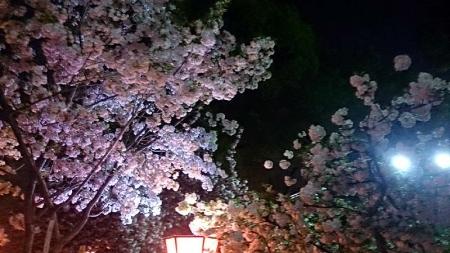 桜の通りぬけ