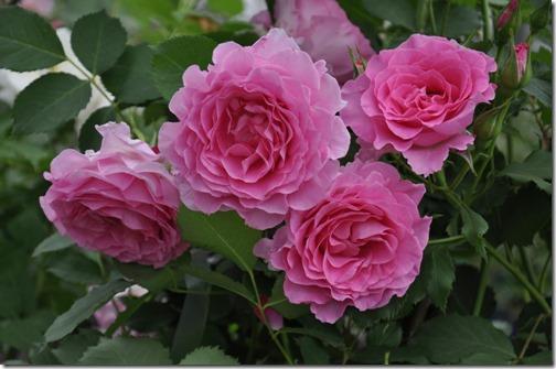 ピンクオブプリンセス春25
