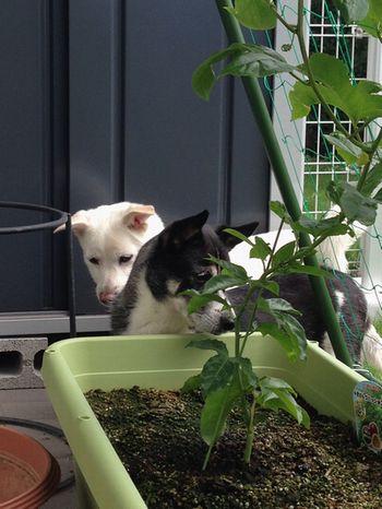 パッションフルーツと犬