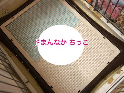 DSC00661.jpg