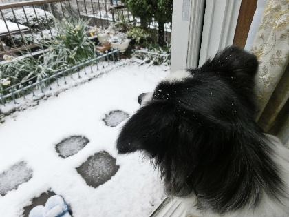 140208雪1