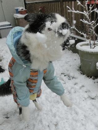 140208雪8