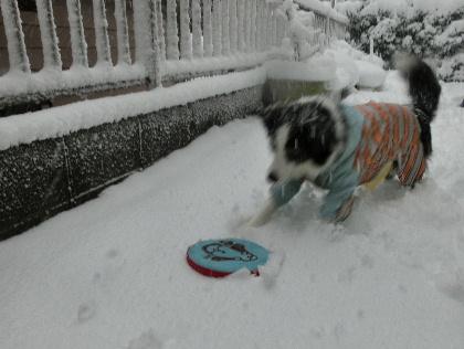 140208雪14