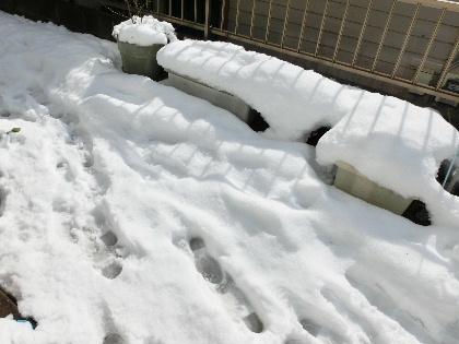 140209雪1