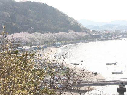 140401桜11