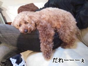 hanakizu3.jpg