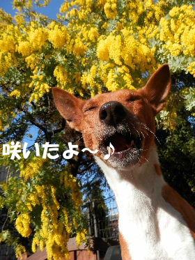 2014_03060023.jpg