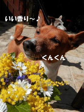 2014_03060032.jpg