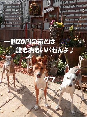 2014_040900081.jpg