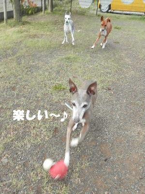 2014_05290035.jpg