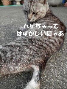 2014_06030071.jpg