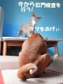 2014_06110012.jpg