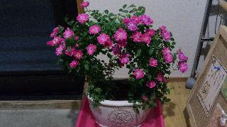 母の日のプレゼントありがとう