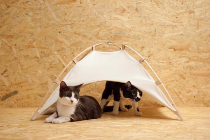 「#catstudyhouse」-1