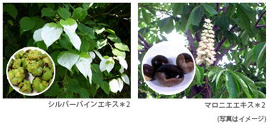 美白成分に加え2種類の植物からなるブライトエキス配合