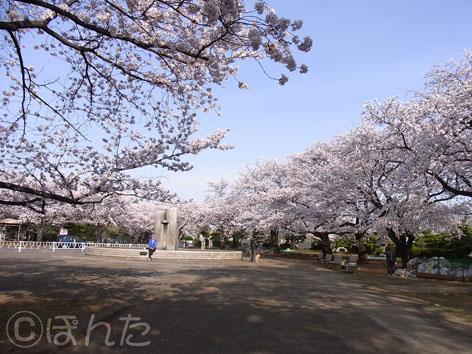 2014桜_4