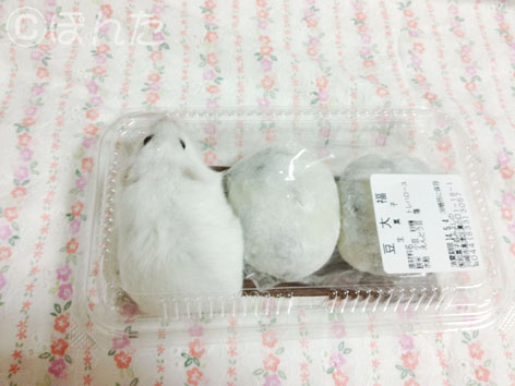 ぱんな_柏餅2