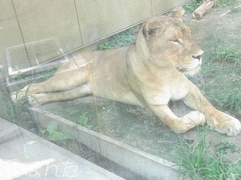 東武動物公園2_2