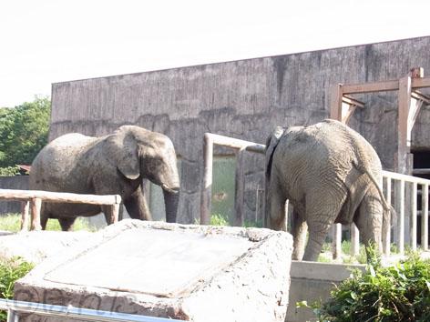 東武動物公園2_10