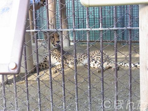 東武動物公園2_6