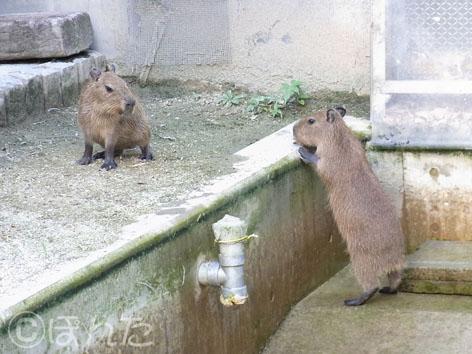 東武動物公園3_5