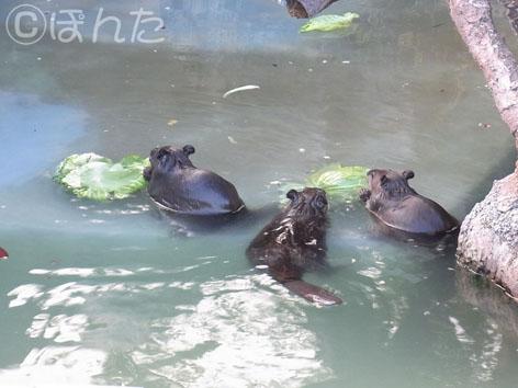 東武動物公園3_2