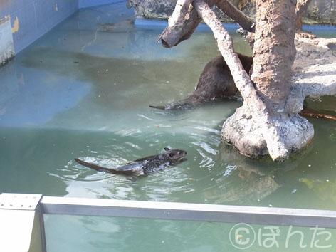 東武動物公園3_1