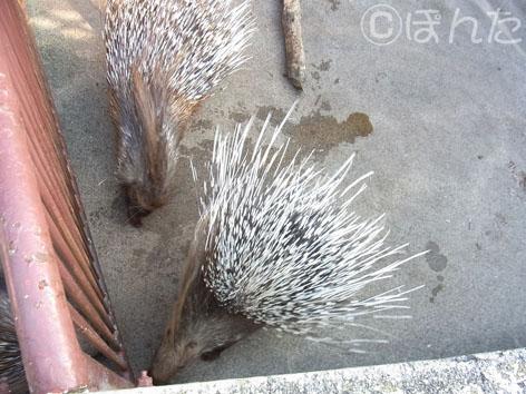 東武動物公園3_7