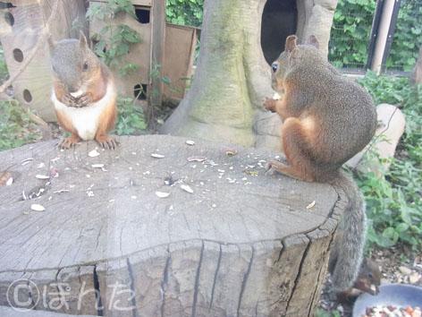 東武動物公園3_11