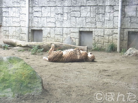多摩動物園_5