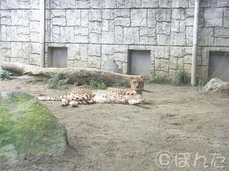 多摩動物園_6