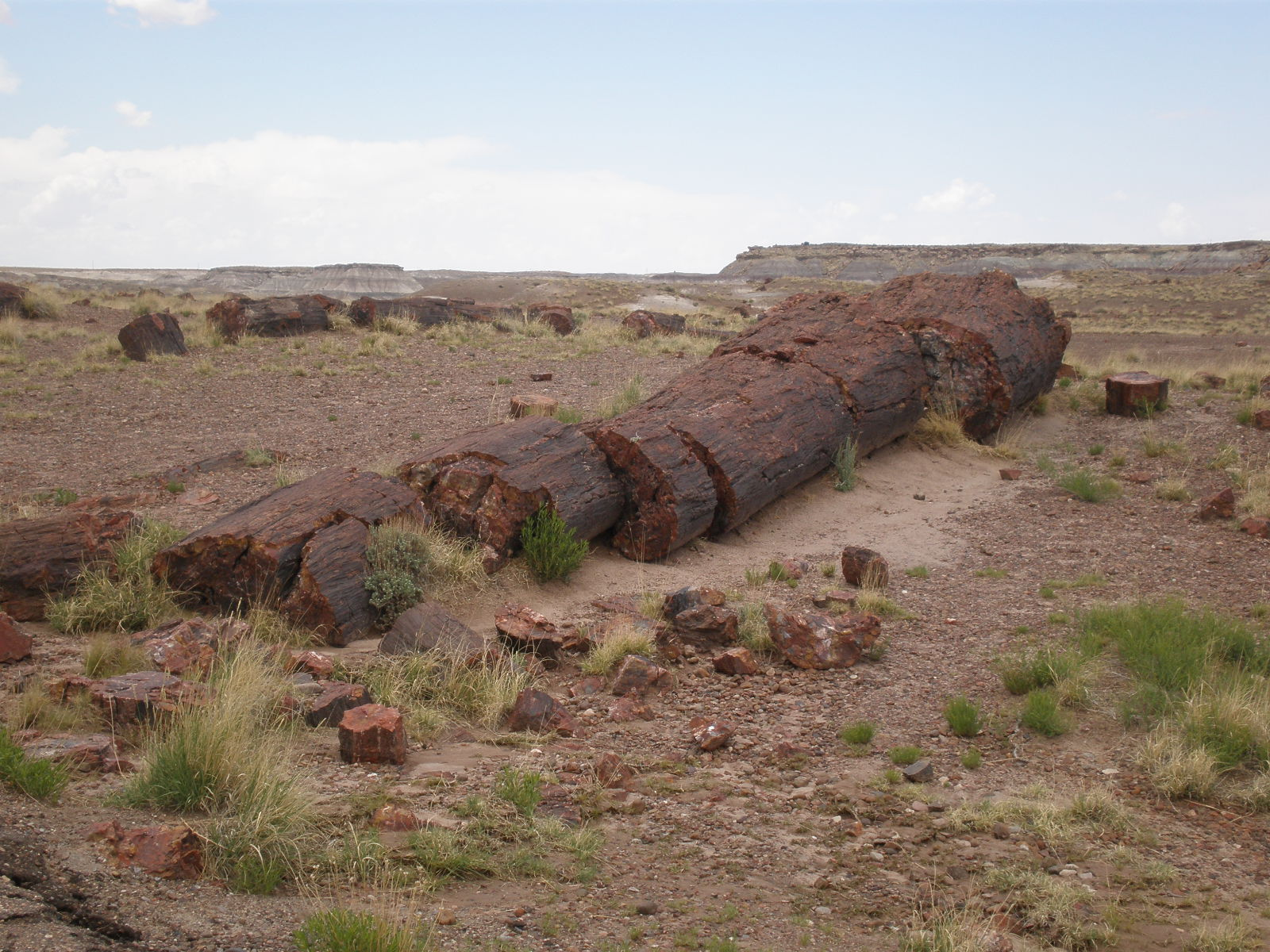 Petrified Forest National Park5