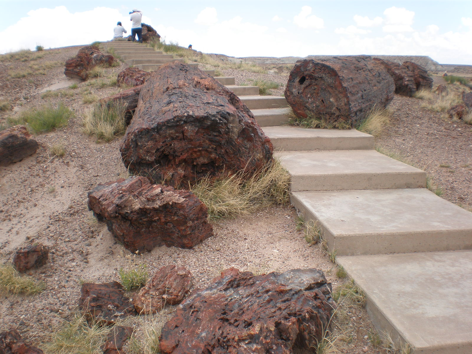 Petrified Forest National Park6
