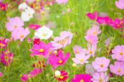20140310春の花2