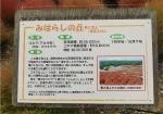 ひたち海浜公園コキア説明
