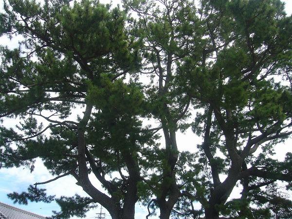 十郎兵衛屋敷三百年前の庭 26.9.18