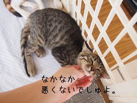 20140824joutokai21_2014082421344925e.jpg