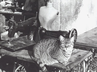 cat-sewing-machine-and-manikin[1]