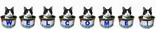 猫welcome