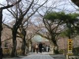 taishasakura3.jpg