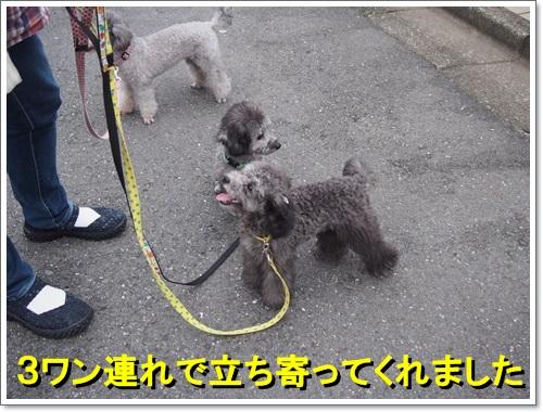 20140829_001.jpg