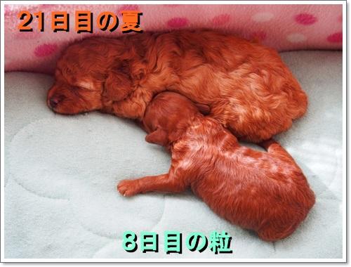 20140831_003.jpg